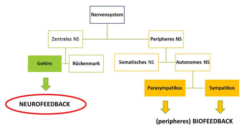 Unterschiede Bio- Neurofeedback